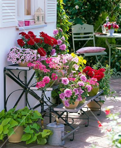 pflanzentreppe mit balkonblumen bild kaufen living4media. Black Bedroom Furniture Sets. Home Design Ideas