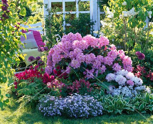 rhododendron scintillation und yakushimanum silberwolke. Black Bedroom Furniture Sets. Home Design Ideas