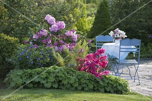 rhododendron scintillation alpenrose georg ahrens. Black Bedroom Furniture Sets. Home Design Ideas