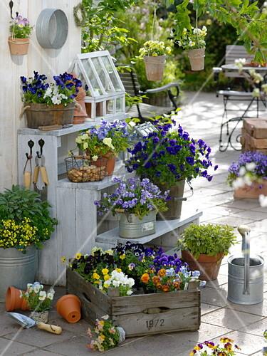 hornveilchen arrangement auf der fr hlings terrasse. Black Bedroom Furniture Sets. Home Design Ideas