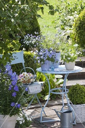 kleine terrasse mit blauem tisch und stuhl viola cornuta blue hornveilchen bild kaufen. Black Bedroom Furniture Sets. Home Design Ideas