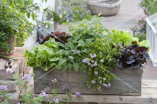 holzkiste mit kr utern und salaten bepflanzen bild