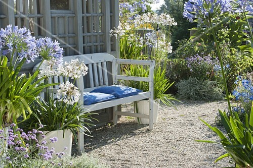 kies terrasse mit agapanthus am gartenhaus bild kaufen living4media. Black Bedroom Furniture Sets. Home Design Ideas