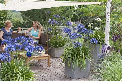 mit sonnensegel schattierte terrasse k bel mit agapanthus. Black Bedroom Furniture Sets. Home Design Ideas