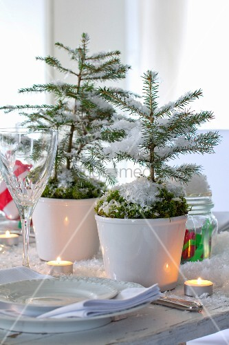 small potted fir trees decorated with moss and artificial snow as festive table decoration. Black Bedroom Furniture Sets. Home Design Ideas