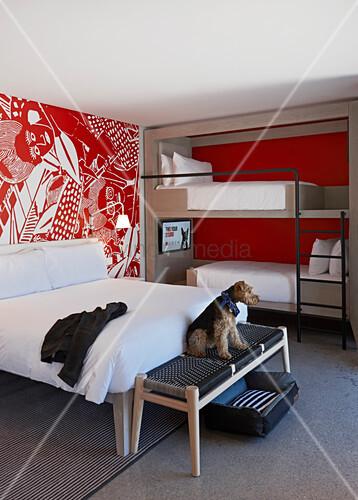 Modernes hotelzimmer mit doppelbett etagenbett und hund - Flecken weisse wand entfernen ...