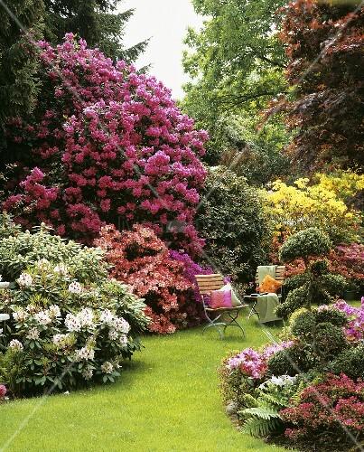 gartenst hle zwischen bl henden rhododendron azaleen. Black Bedroom Furniture Sets. Home Design Ideas