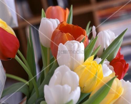 blumenstrauss rote weisse gelbe tulpen bild kaufen living4media. Black Bedroom Furniture Sets. Home Design Ideas
