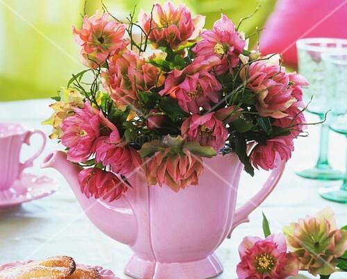 lenzrosen in rosa kaffeekanne bild kaufen living4media. Black Bedroom Furniture Sets. Home Design Ideas