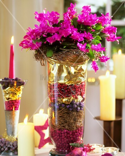 Weihnachtskaktus weihnachtlich dekoriert im glas bild for Vase weihnachtlich dekorieren