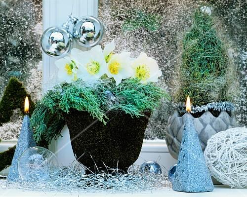winterliche dekoration mit christrosen und zypressenzweigen bild kaufen living4media. Black Bedroom Furniture Sets. Home Design Ideas