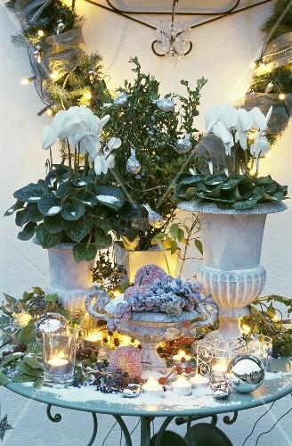 weihnachtliche tischdeko mit alpenveilchen bild kaufen living4media. Black Bedroom Furniture Sets. Home Design Ideas