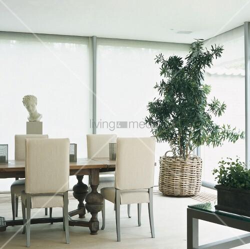 helle esszimmerecke mit ppiger zimmerpflanze im weidenkorb bertopf und einer weissen b ste im. Black Bedroom Furniture Sets. Home Design Ideas
