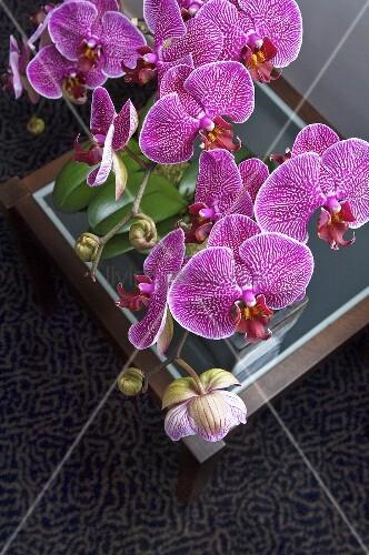 lila orchideen bild kaufen living4media. Black Bedroom Furniture Sets. Home Design Ideas