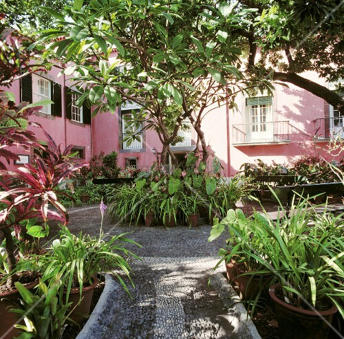 gr ne pflanzen in t pfen im hof eines rosafarbenen hauses. Black Bedroom Furniture Sets. Home Design Ideas