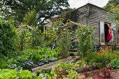 Her Home is Her Garden