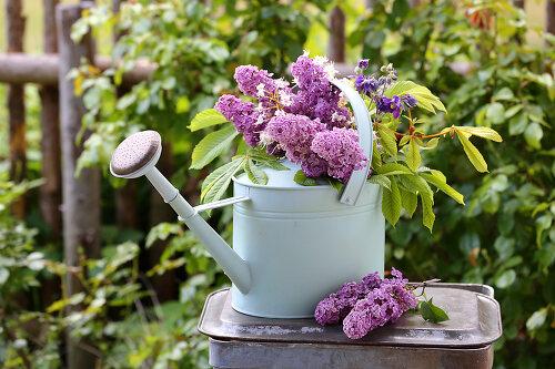 Lush Lilac
