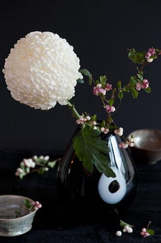 Chinesische Chrysantheme