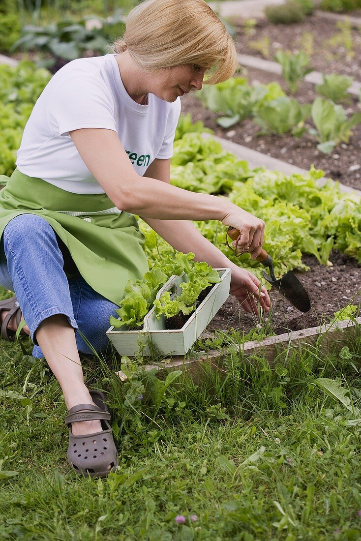 A woman planting lettuce in a flower bed