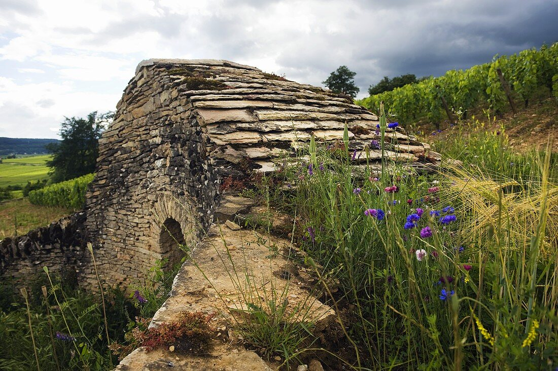 An old stone house in Corton Rebberg, Burgundy, France