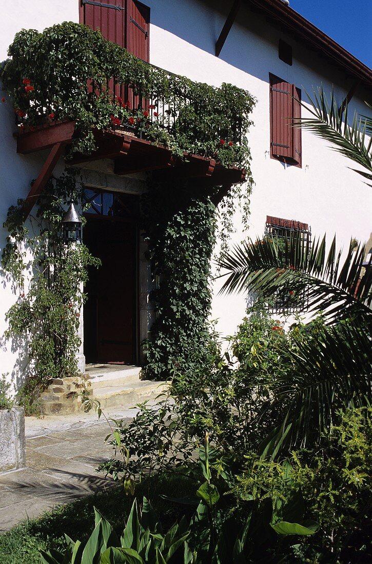 Haus mit Balkon und Kletterpflanzena