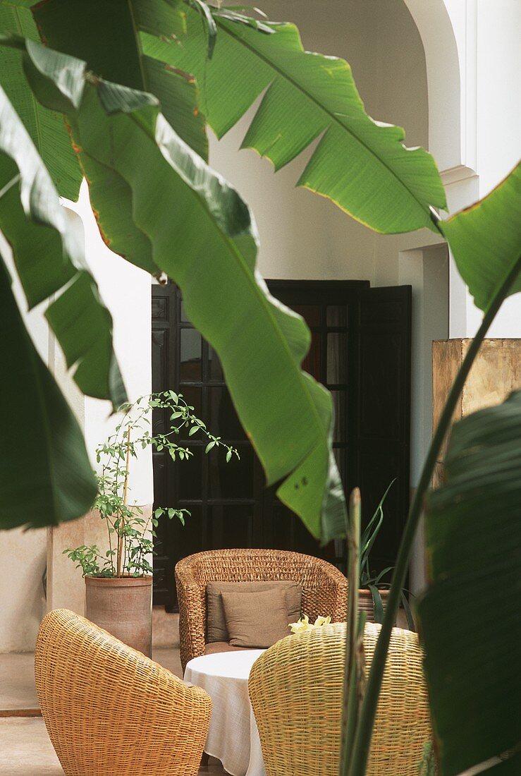 A courtyard with a banana tree (Morocco)