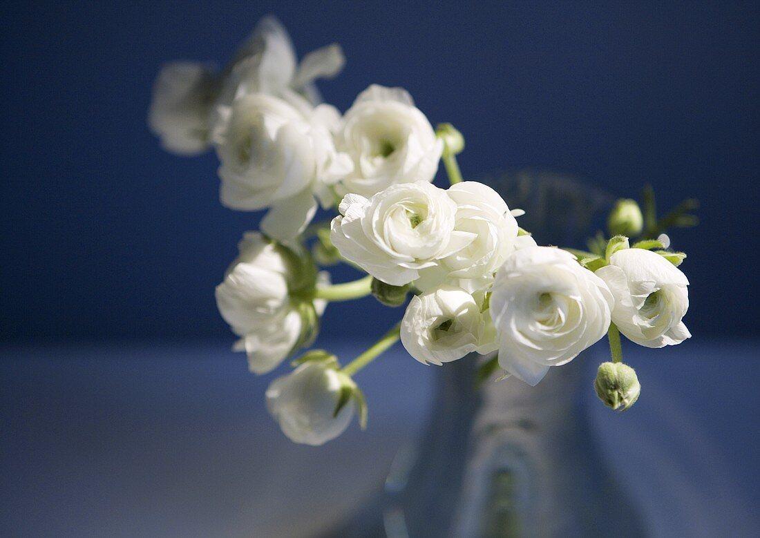 White Ranunculus Flowers