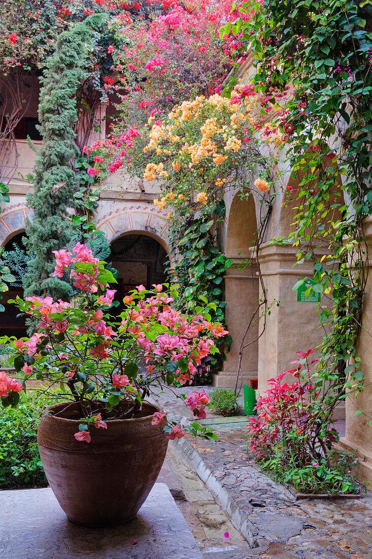 Innenhof der Alten Welt, Oaxaca, Mexiko
