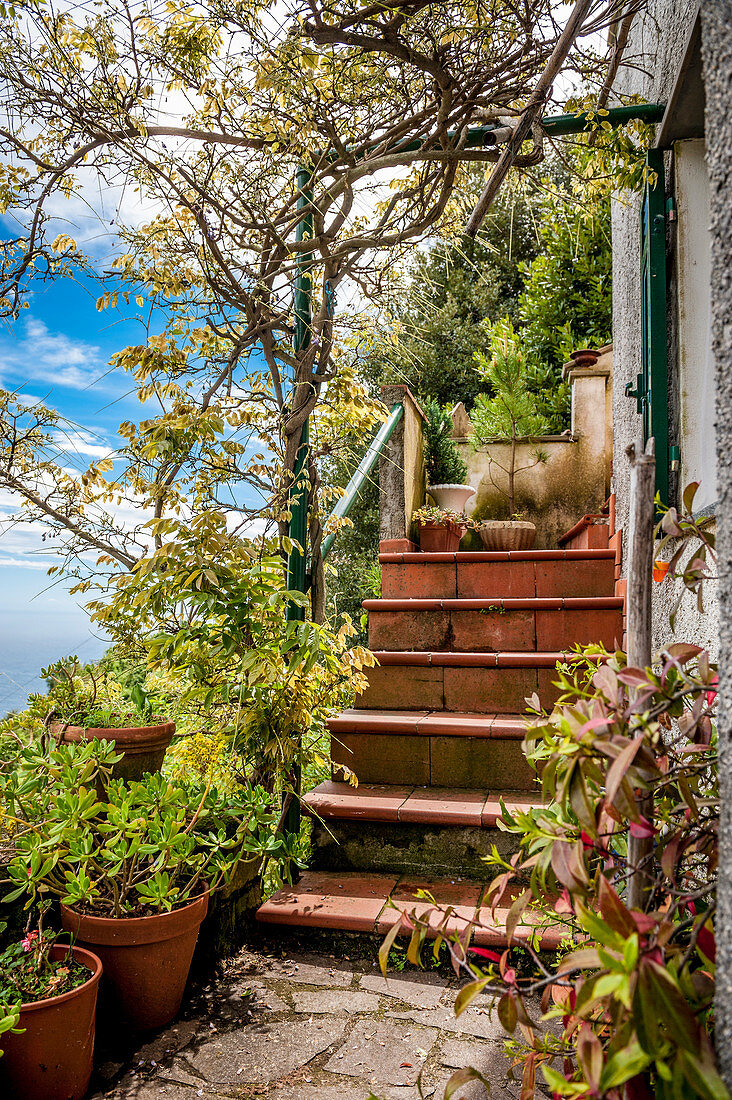 Terrace in the vineyards above Vernazza, Cinque Terre, Italy