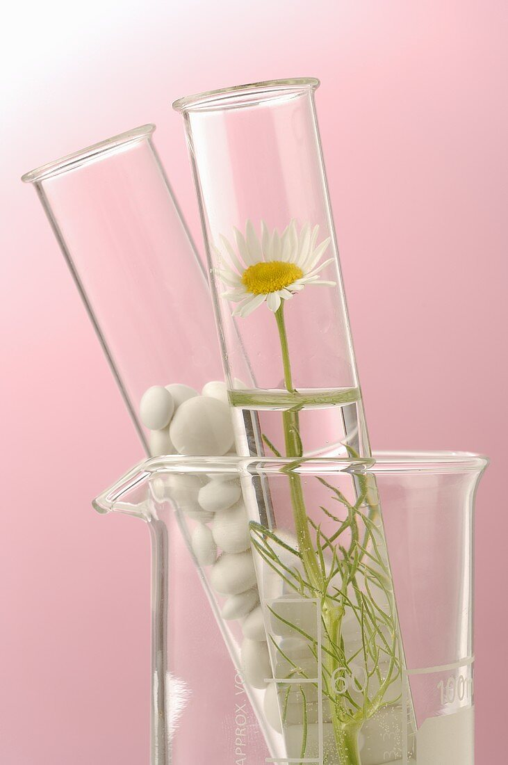 Chamomile flowers and tablets in glass tubes