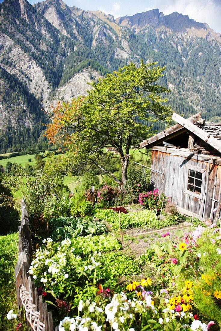 Gemüsegarten vom Pretzhof, Südtirol