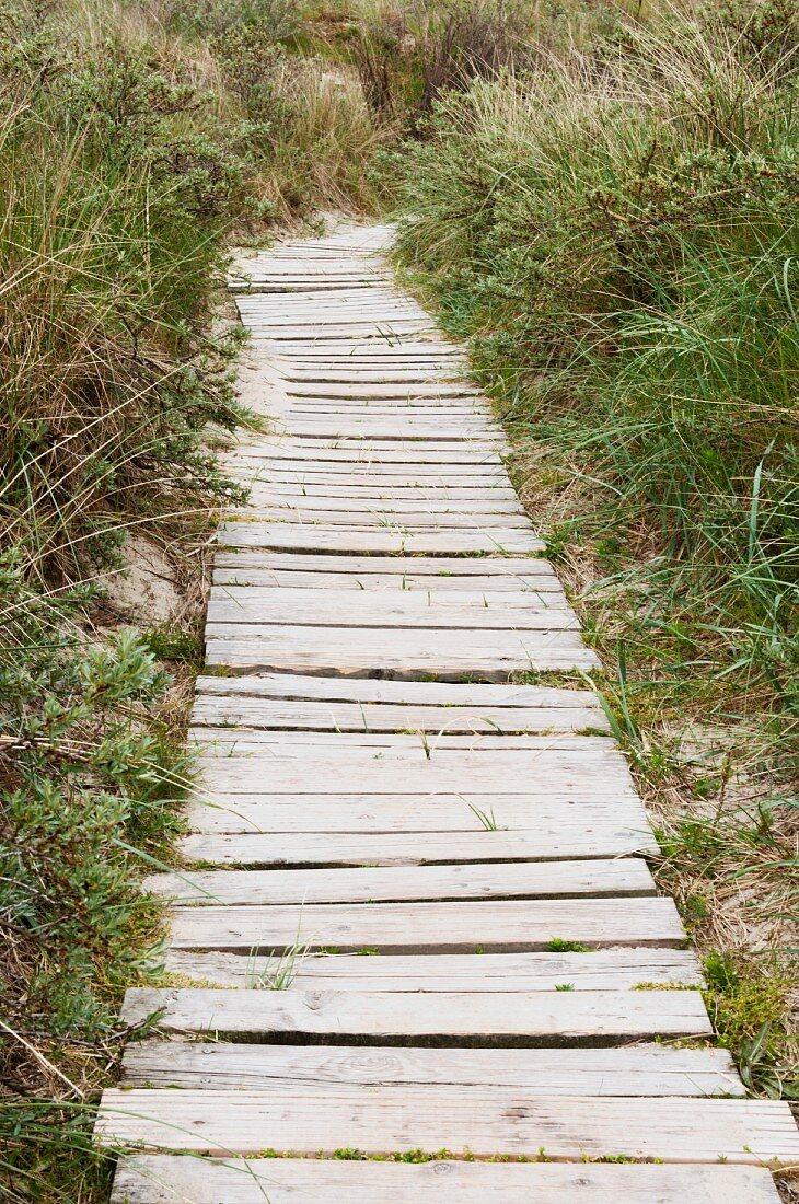 Narrow wooden path through the dunes