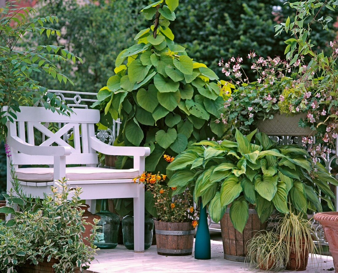 Flowering summer balcony with large pot of hostas