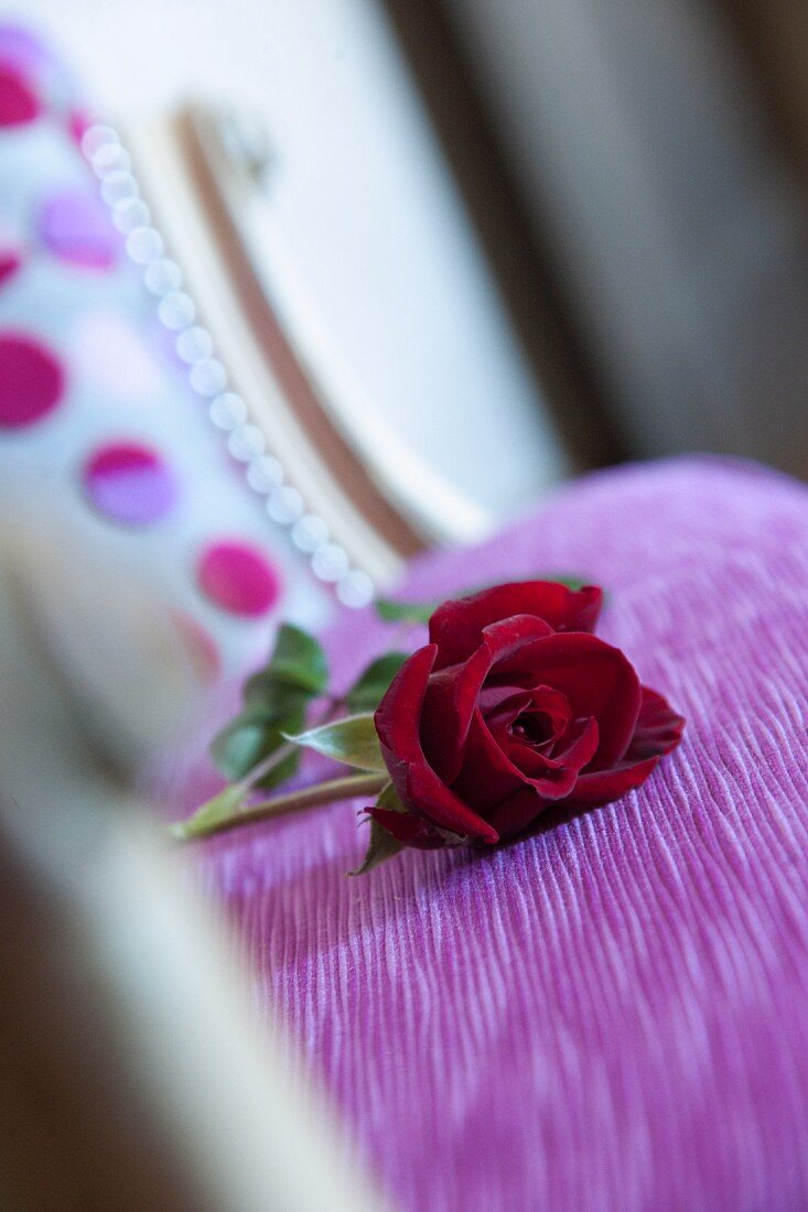 Red rose on violet upholstery