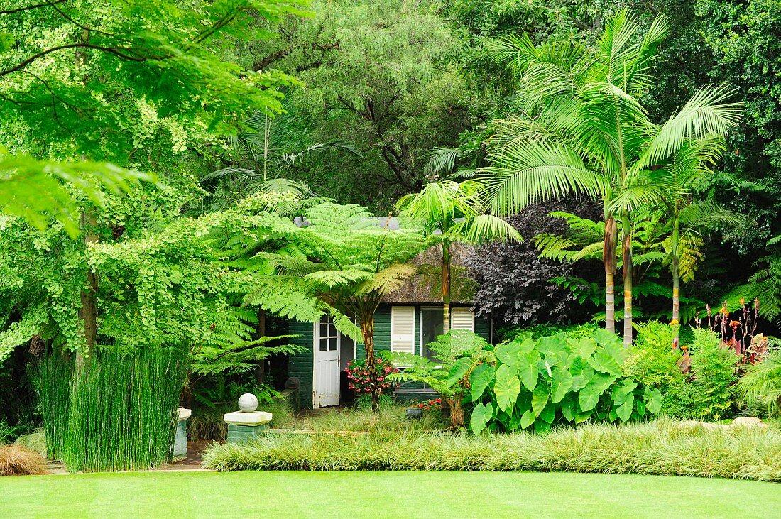 Wooden house hidden under tropical foliage plants