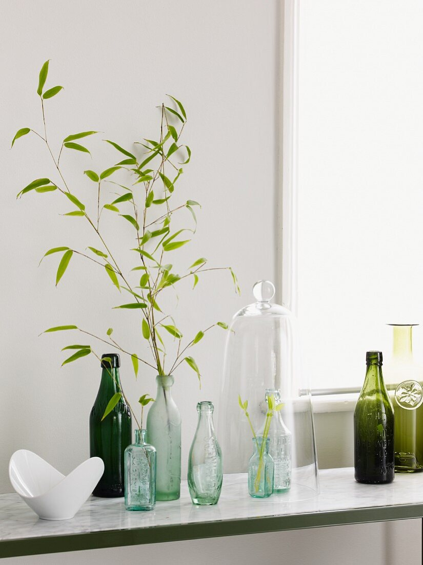 Branches with leaves in a bottle between a vintage bottle collection on a marble surface in front of a wall