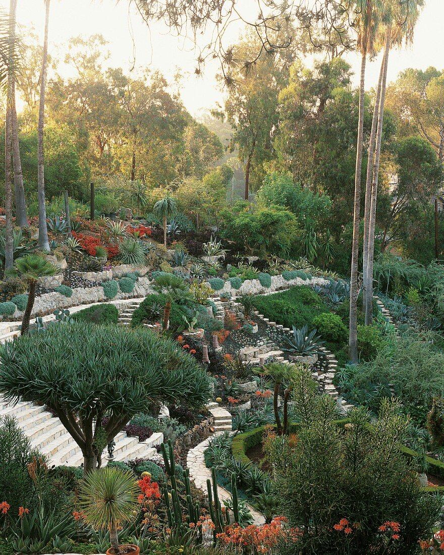 Desert style garden in Los Angeles, California