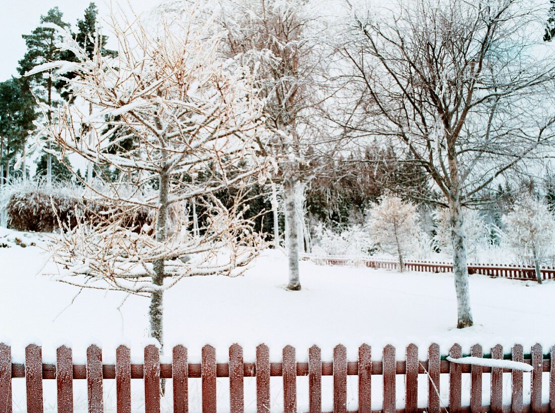 Snowy garden with wooden fence