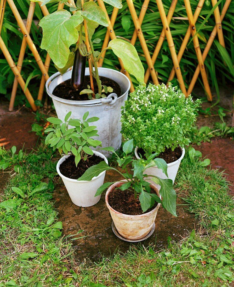Plants in pots in a garden