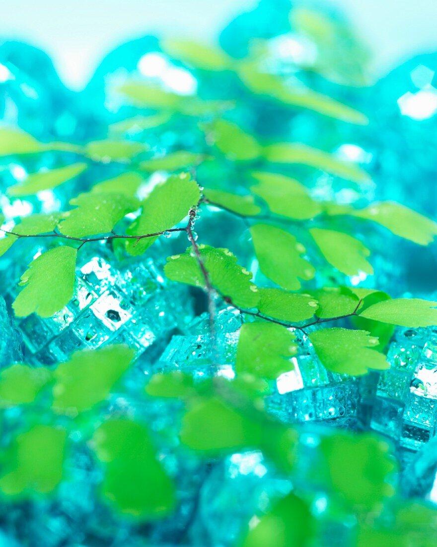 Blätter des Frauenhaarfarns (Adiantum) auf Discokugeln