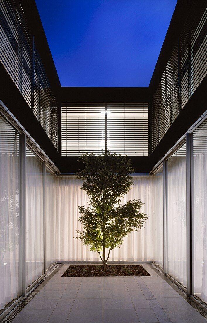 Modern Courtyard Design A Single Tree Buy Image 11002949 Living4media