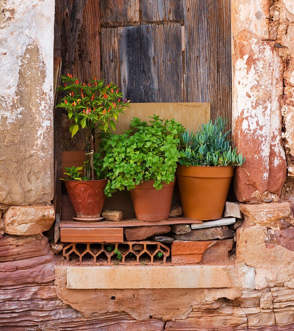 Niche in wall of old house containing plant pots