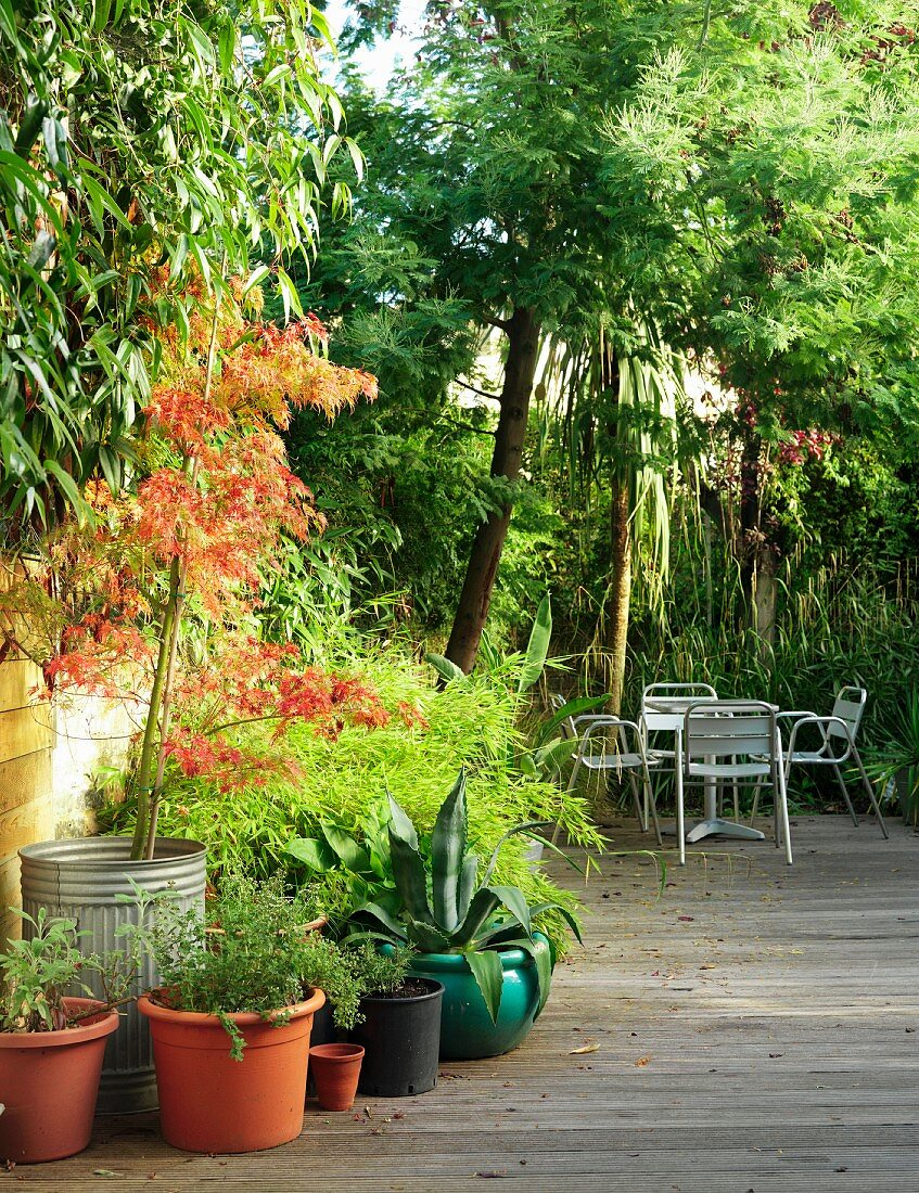 Plant pots and seating on wooden decking