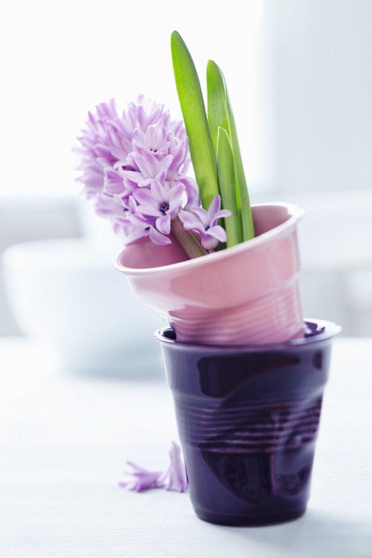 Hyacinth in ceramic beaker