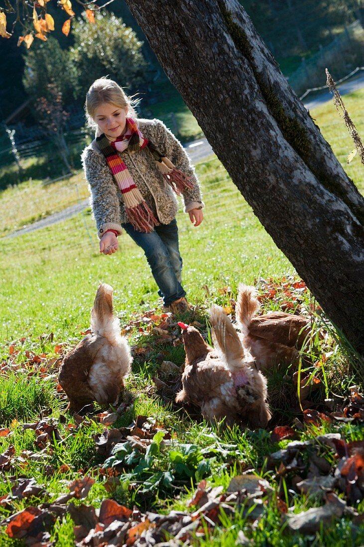 Girl feeding hens in autumnal meadow