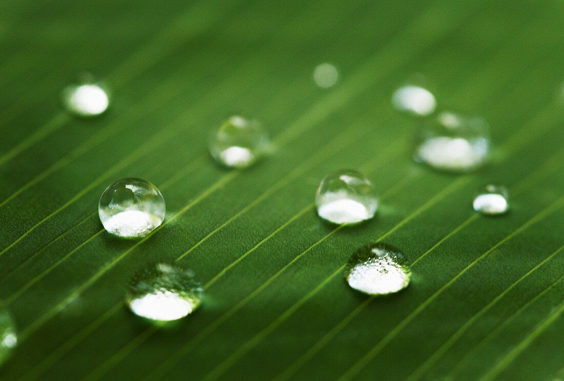 Drops of water on a leaf