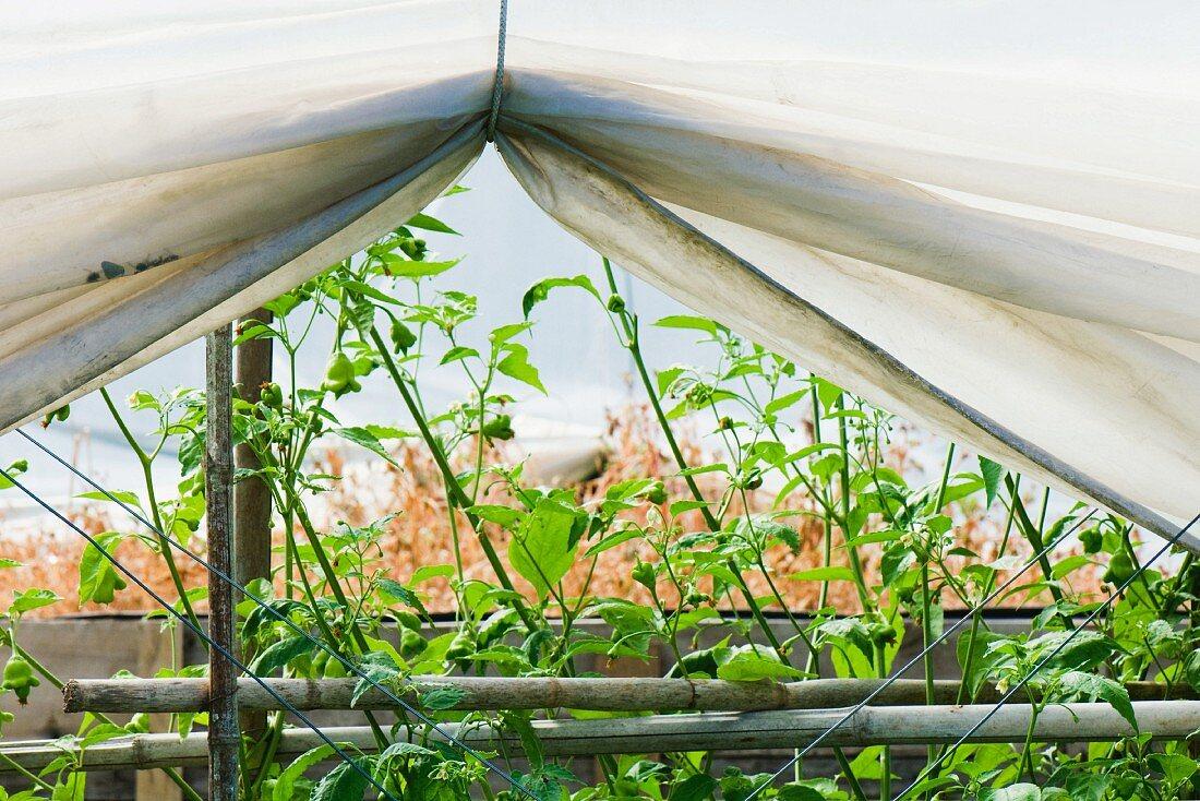 Eine Abdeckplane über Beet mit Pflanzen