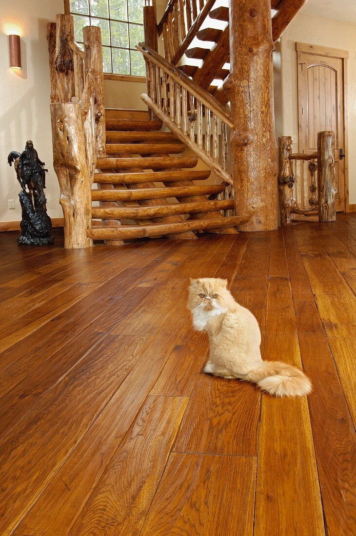 Persian cat on hickory hardwood floor near a log staircase