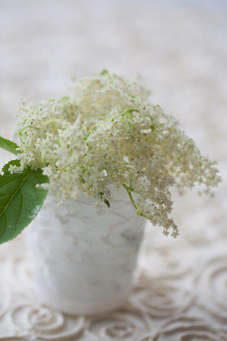 Elderflower umbel in vase