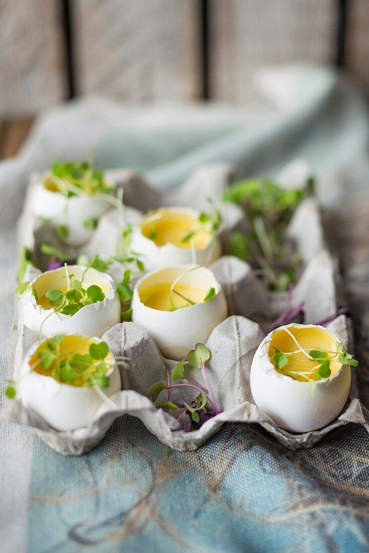 Parmesanpudding mit Kresse in Eierschalen